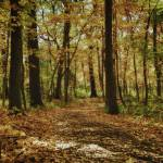 """Wooded Path"" by fotographics"