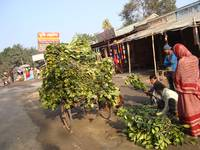 SELLING JACK-FRUIT LEAVES