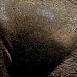 """Artistic elephant skin"" by Donshots"