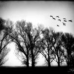 """The Flock"" by DavidHensenPhotography"
