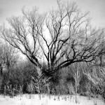 """""""Photography For Sale - Frosted Trees Black & White"""" by word1001"""
