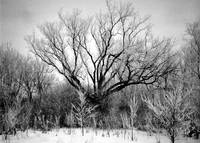 Photography For Sale - Frosted Trees Black & White