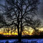 """The Field Tree HDR"" by ElementalChangesArt"
