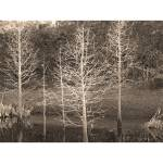 """Winter Tree Collage"" by freyfoto"
