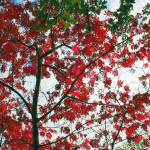 """Acer"" by Autofocused"