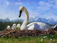 bright summer days / swan family