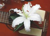 Guitar with lillies 02