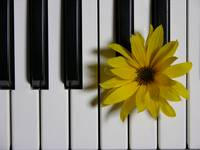 Sunflower piano