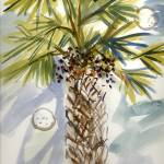 """cabbage palm"" by PaulStudios"