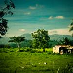 """Haitian Fields"" by C_Rivait"