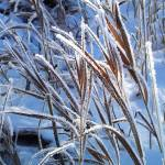 """Hoarfrost on Grass"" by Persuaded"