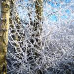 """Hoarfrost on Trees"" by Persuaded"