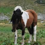"""""""Horse"""" by AlexanderAcostaOsorio"""