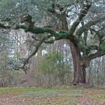 """""""Magic Tree"""" by Kandkla"""