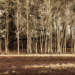 """""""Dry Pond and Sapling Screen"""" by Kandkla"""