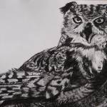 """Great Horned Owl"" by Miranda_Barnhardt"