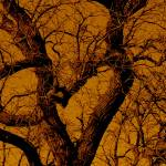 """""""Old Tree"""" by GG-SMITH"""