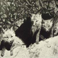 Foxes Art Prints & Posters by Miranda Barnhardt