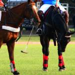 """""""Polo Ponies"""" by LeahsRockPhotography"""