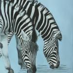 """""""Zebras"""" by sthieme"""