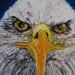 """Big Bald Eagle Eyes"" by Miranda_Barnhardt"