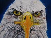 Big Bald Eagle Eyes