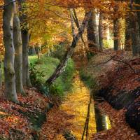 Autumn Pallet Art Prints & Posters by Peter van Nugteren
