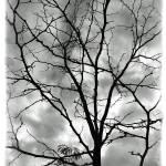 """""""Bare til Spring"""" by jbjoani2"""