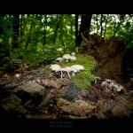 """Mushroom season (19/52)"" by nick_reck"