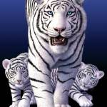 """White Tigers"" by jerrylofaro59"
