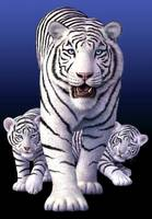 White Tigers