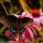 """Dynamic Butterfly"" by kentsphotocorner"