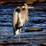 """dynamic heron 2"" by kentsphotocorner"
