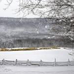 """Winter sheep"" by Donshots"