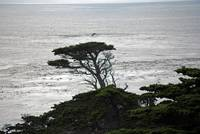 Point Lobos_10 09 09_58