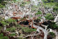 Point Lobos_10 09 09_61