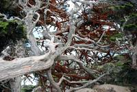 Point Lobos_10 09 09_60