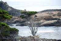 Point Lobos_10 09 09_59