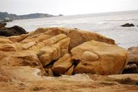 Point Lobos_10 09 09_43
