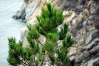 Point Lobos_10 09 09_34