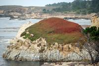 Point Lobos_10 09 09_31