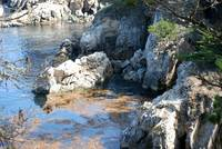 Point Lobos_10 09 09_14