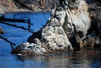 Point Lobos_10 09 09_11
