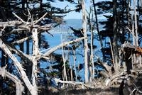Point Lobos_10 09 09_08
