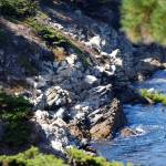 """Point Lobos_10 09 09_03"" by HBarrison"