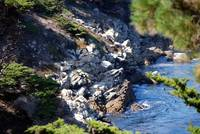 Point Lobos_10 09 09_03