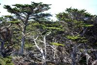 Point Lobos_10 09 09_02