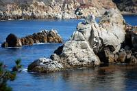 Point Lobos_10 09 09_12