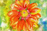 Orange Tropical Daisy Watercolor