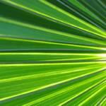 """Green"" by ChristineStonebridge"